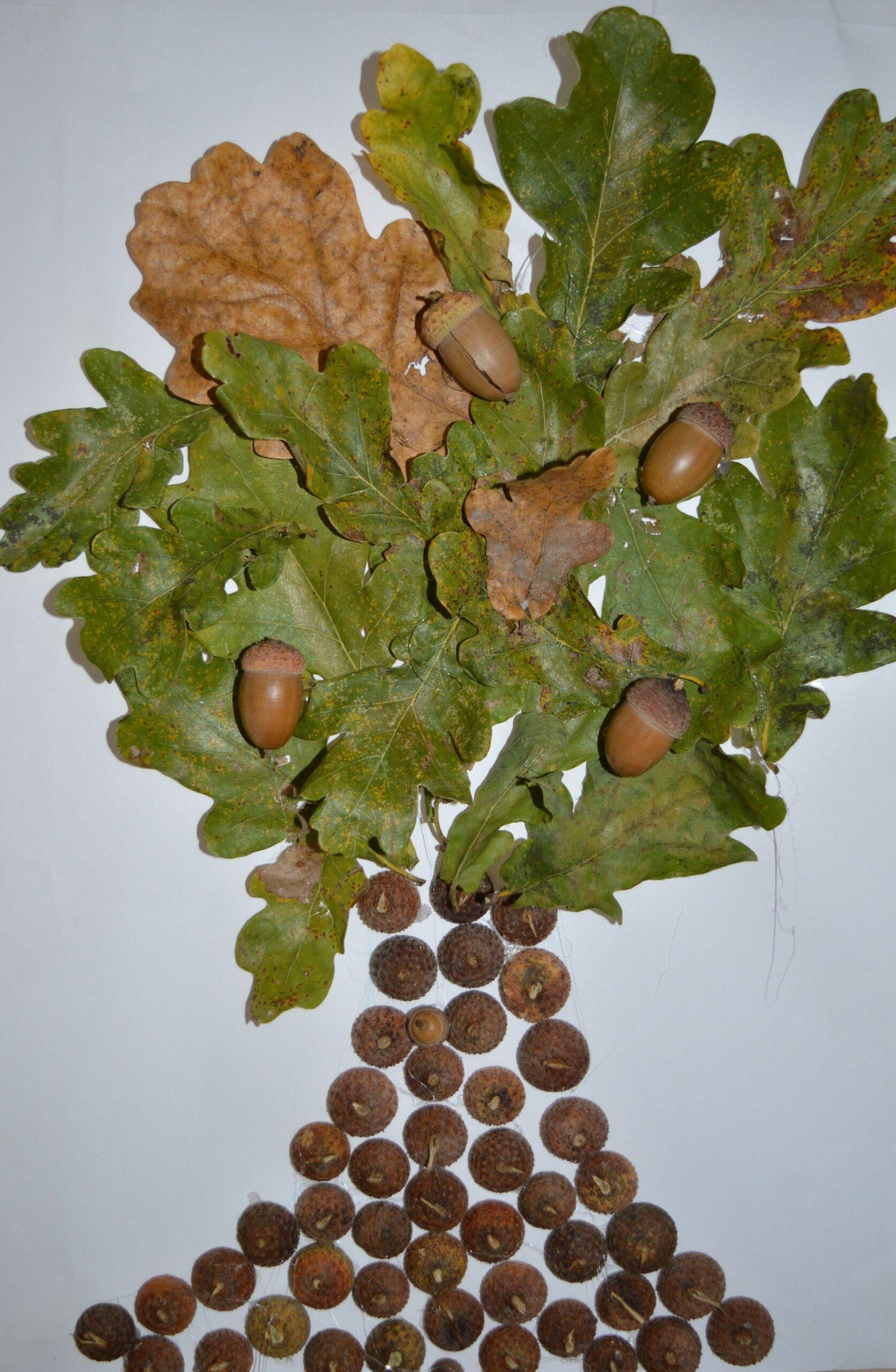 10 października- Dzień Drzewa