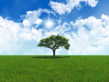 Magiczne drzewo – Konkurs